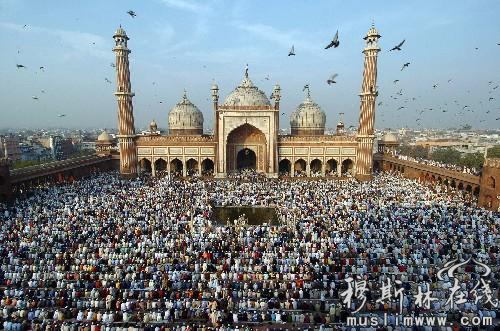 16亿穆斯林支持实施伊教法
