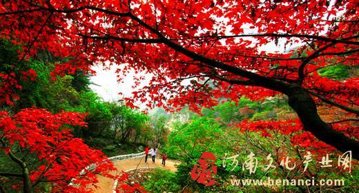 据查,景区内有包括国家级保护植物领春木,水曲柳,中华龙鳞榆,暖树,石