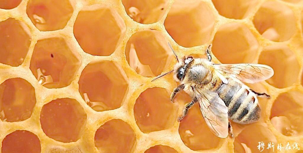 蜂蜜主图背景素材