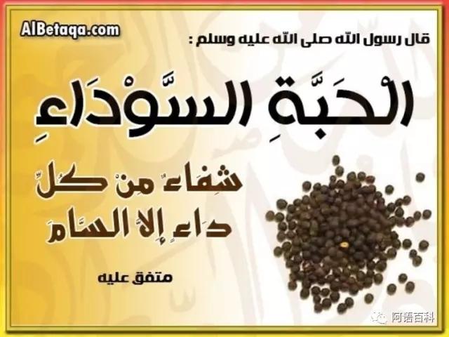 伊斯兰医学--可以治病的七种食物